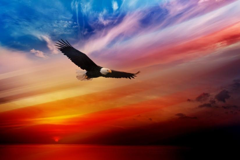 American Eagles Wallpaper