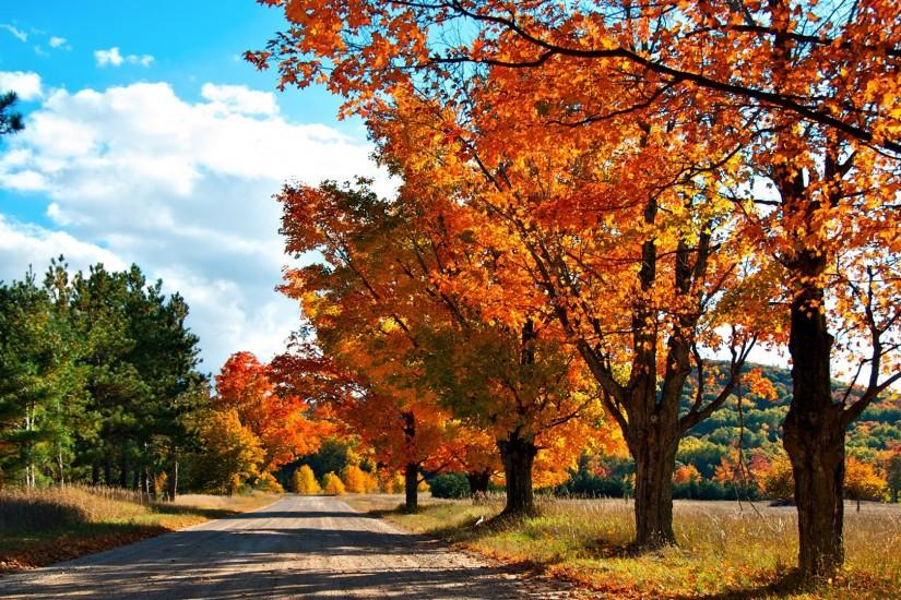 Colorful Tree Hd Autumn Wallpaper ...