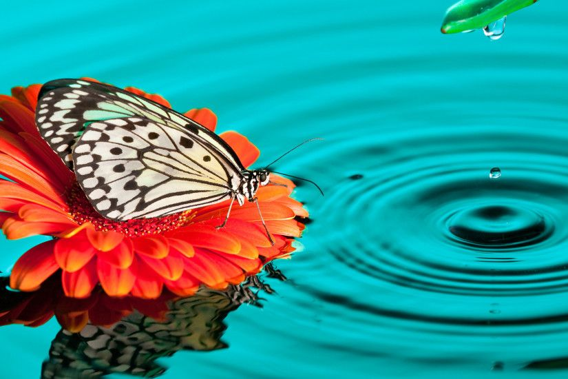 Butterfly Drops HD Wallpapers | Exclusive Wallpapers - HD Wallpapers