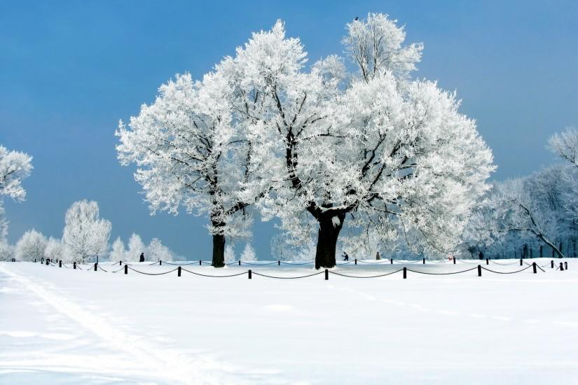 most popular snow background 1920x1200