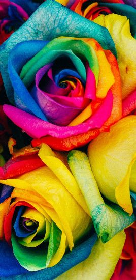Rainbow Flower Rose Color Art Galaxy Note 8 Wallpaper