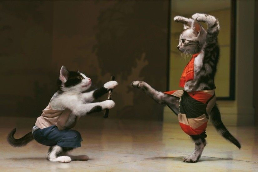 kung fu cat hit fight