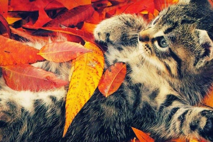 Animal Wallpapers Desktop Images Free Wallpapers Cute: Fall Desktop Wallpapers Backgrounds ·① WallpaperTag