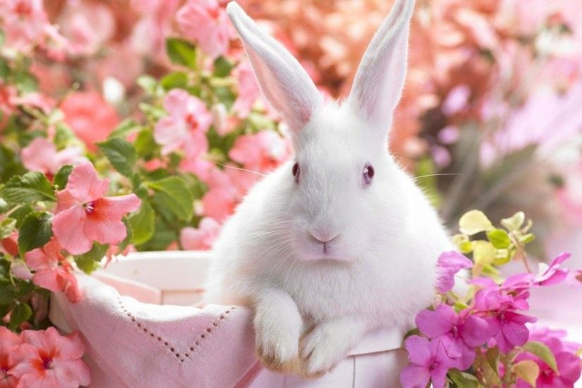 Free Easter Bunny 2013 Background HD Wallpaper Free Easter Bunny .