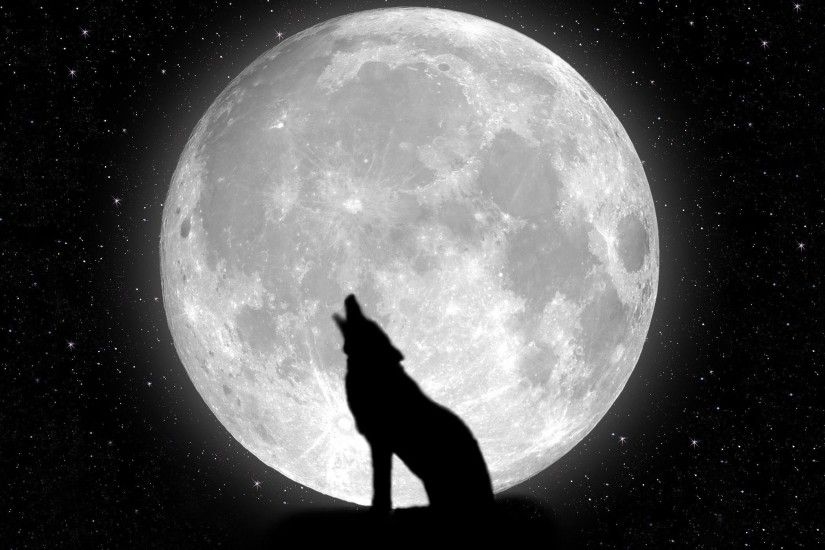Black and white wolf howling at the moon wallpaper - photo#22