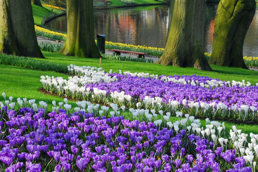 Flowers · Keukenhof Largest Garden Wallpaper HD