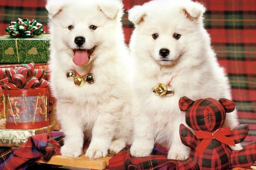 Cute Puppy Christmas Backgrounds (19)