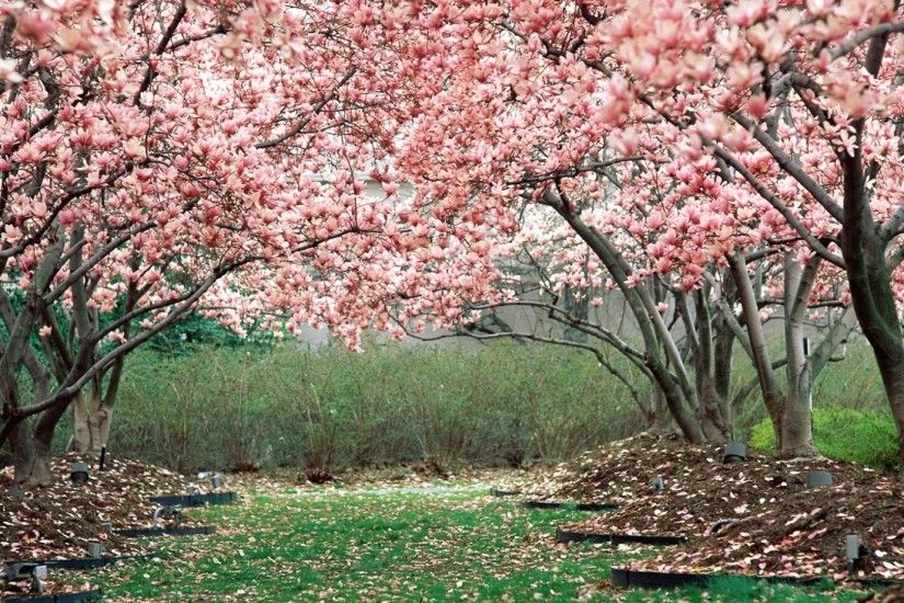 Preview wallpaper spring, garden, flowering, trees, pink 1920x1080