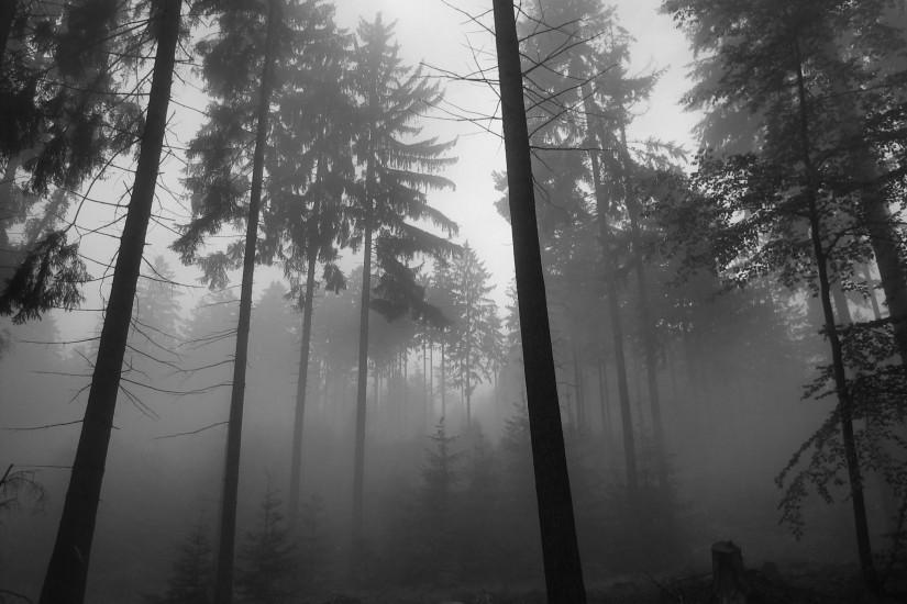 free download dark forest background 2592x1944 for meizu