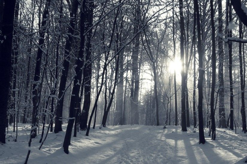 Snowy Forest Wallpaper 45946