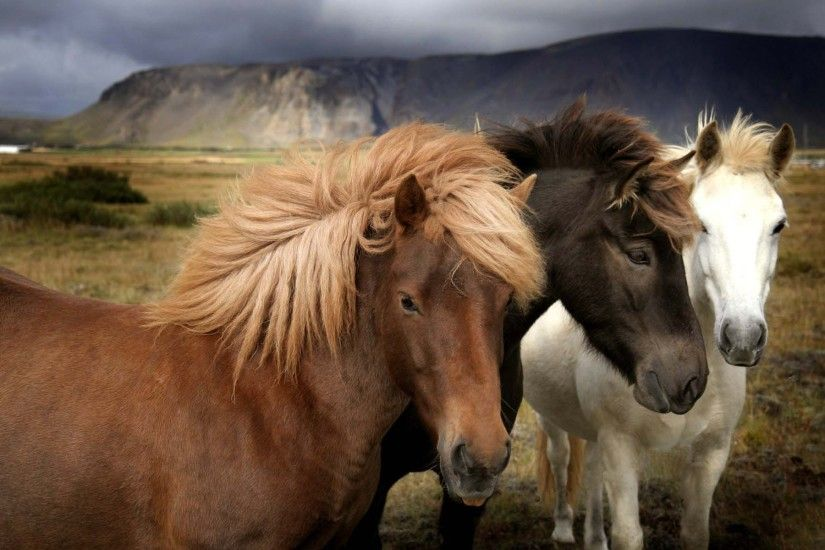 Beautiful Wild Horses Wallpaper | HD Animals and Birds Wallpaper Free  Download ...