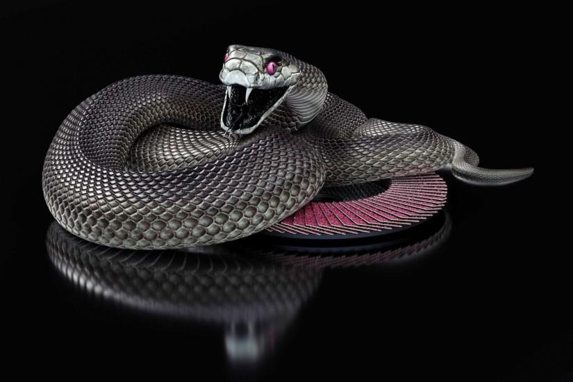 Black Mamba Snake Wallpaper HD Collection Of Black Snake