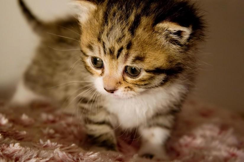 Cute Baby Animals Kitten I really like animals a great deal, cuteness  overload