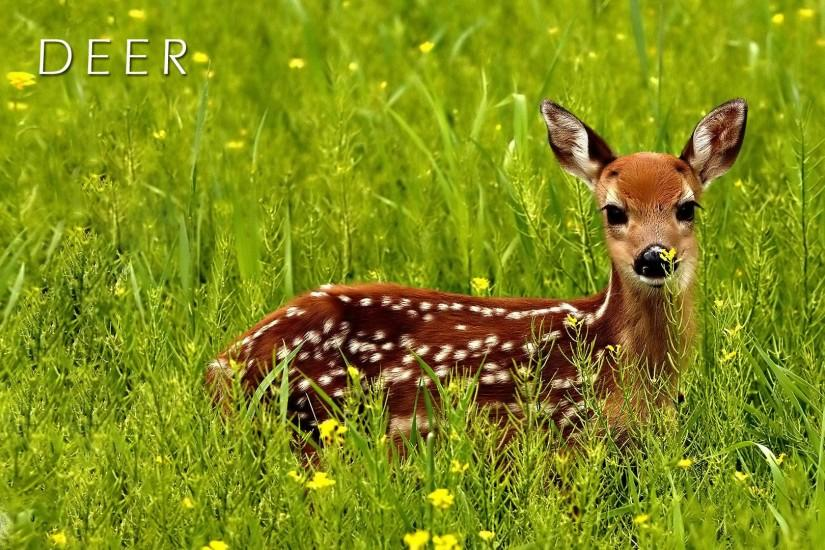 deer wallpaper 1920x1080 for 4k