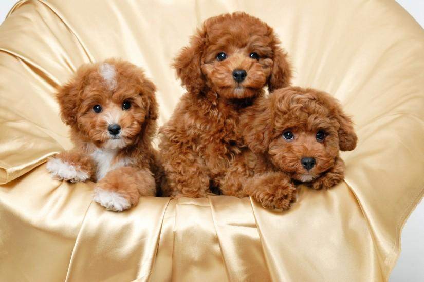 puppies wallpaper 2000x1340 mobile