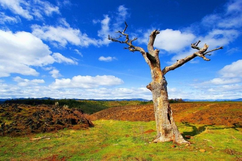 Alone Tree Summer Nature Wallpapers