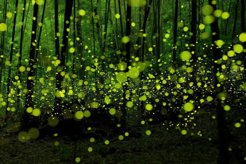 Free Download Fireflies Photos.