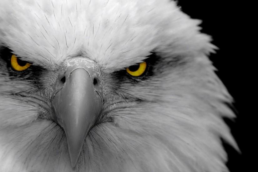 Preview wallpaper eagle, bird, predator, beak 1920x1080