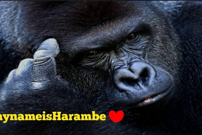 beautiful harambe wallpaper 1920x1080 for 1080p
