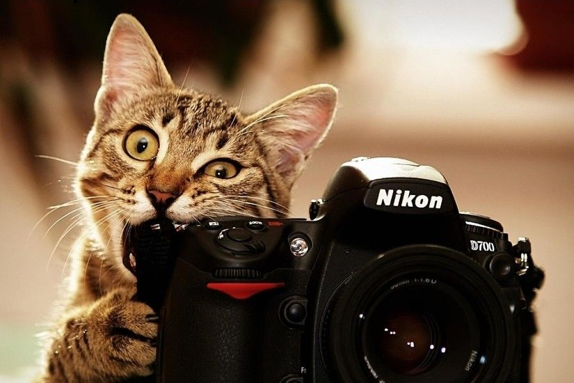 Wallpapers For > Funny Cat Desktop Backgrounds