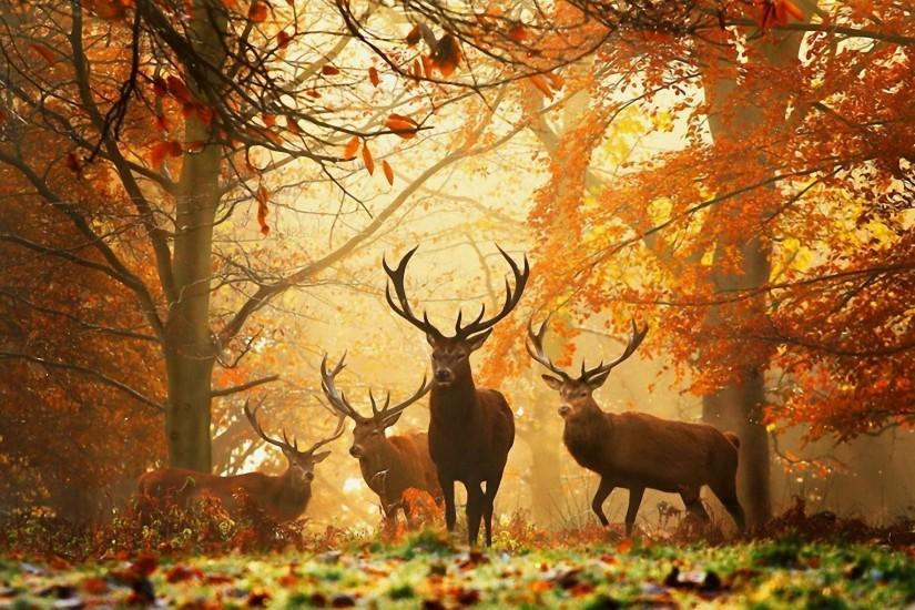 HD Deer Hunting Wallpapers.