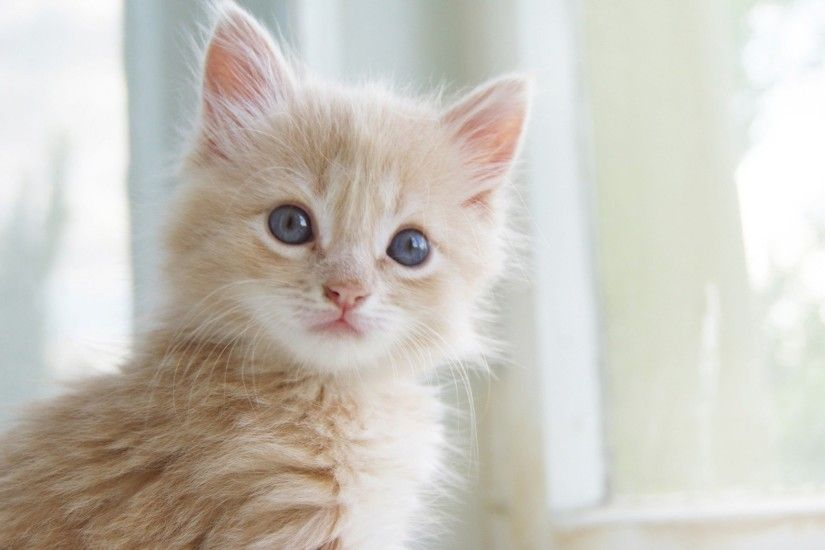 High Quality Image of Cute Kitten : 2880x1800 px