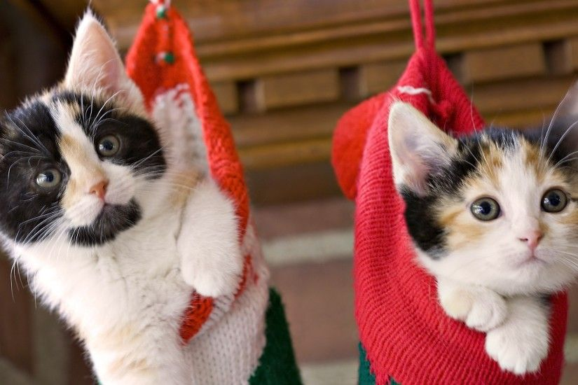 Christmas Cat Wallpaper ①