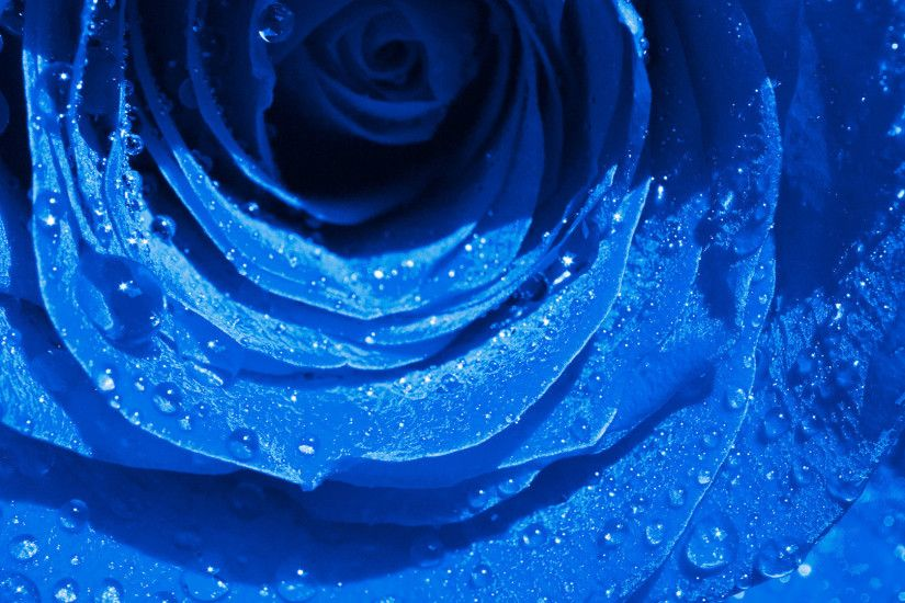 Wet Drops Blue Rose wallpapers (25 Wallpapers)
