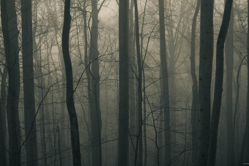 download dark forest background 2560x1600