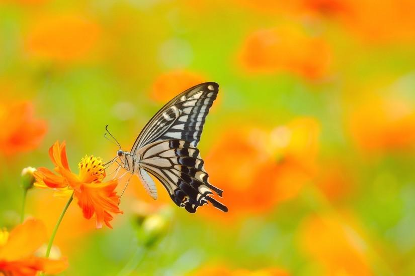 download free butterfly background 1920x1200