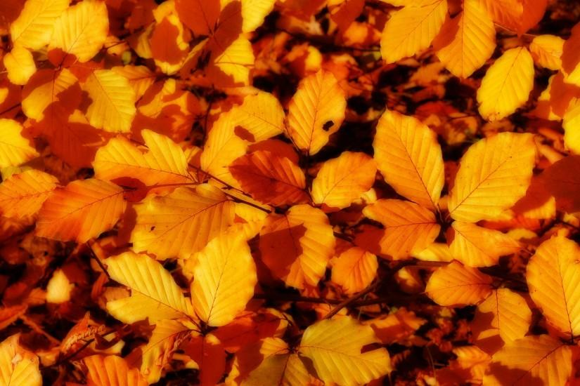 Fall Leaf Wallpaper 22742 Wallpapers | Wallver.