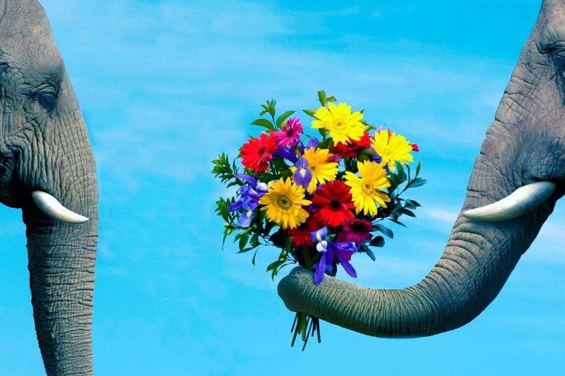 Elephant Desktop Background 1