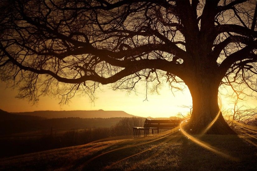 7224 Tree HD Wallpapers | Backgrounds - Wallpaper Abyss