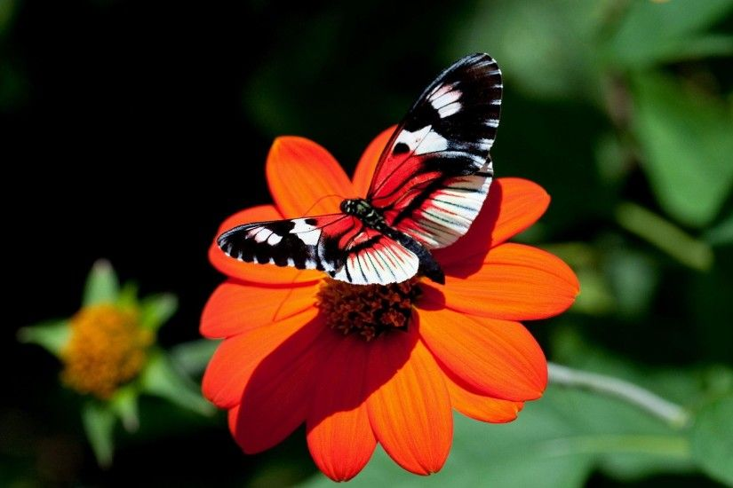 Red-Butterfly-Wallpaper-Designs