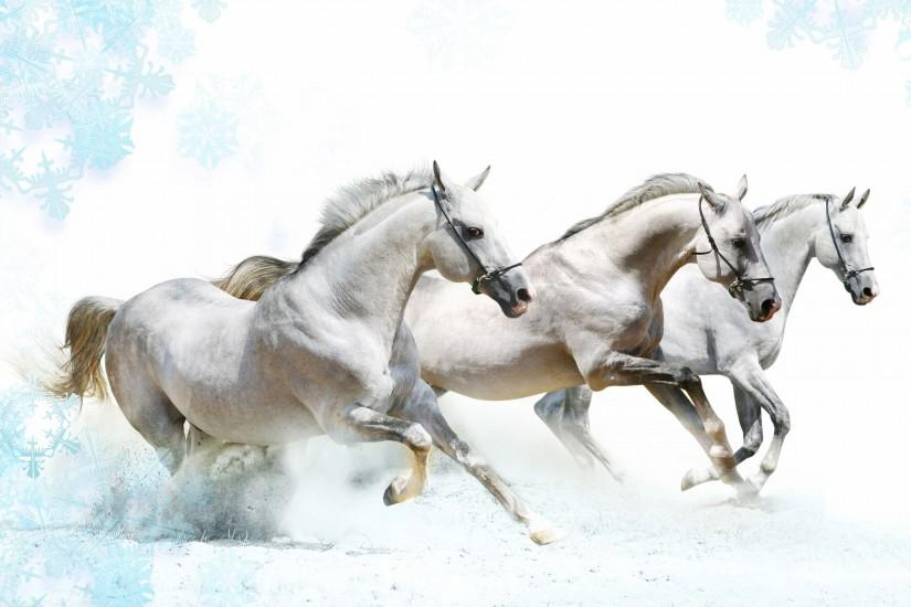 horse wallpaper 2560x1600 for windows 7