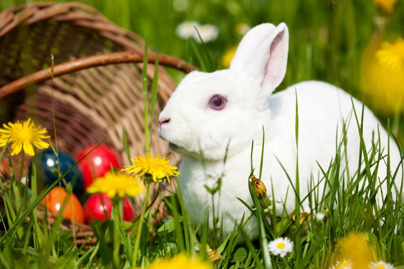 Image detail for -... blue bunny cute rabbit free wallpaper in .