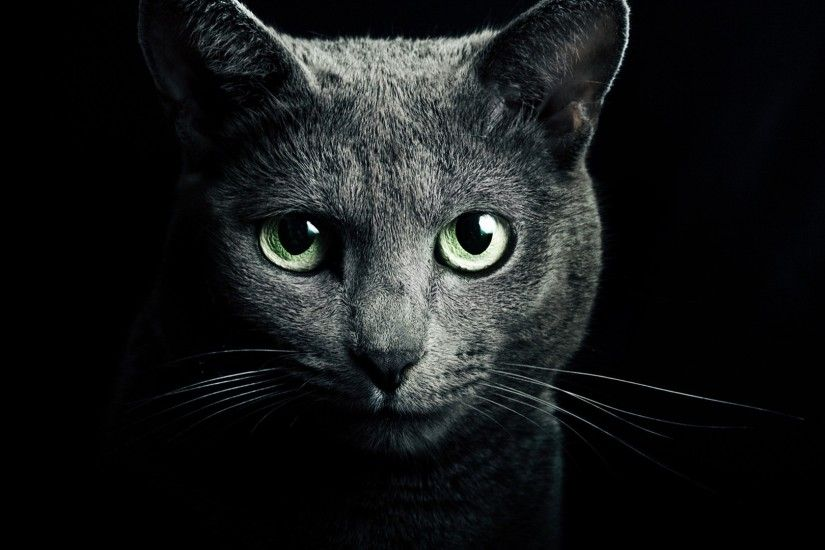 Black Cat Green Eyes Wallpaper 15897