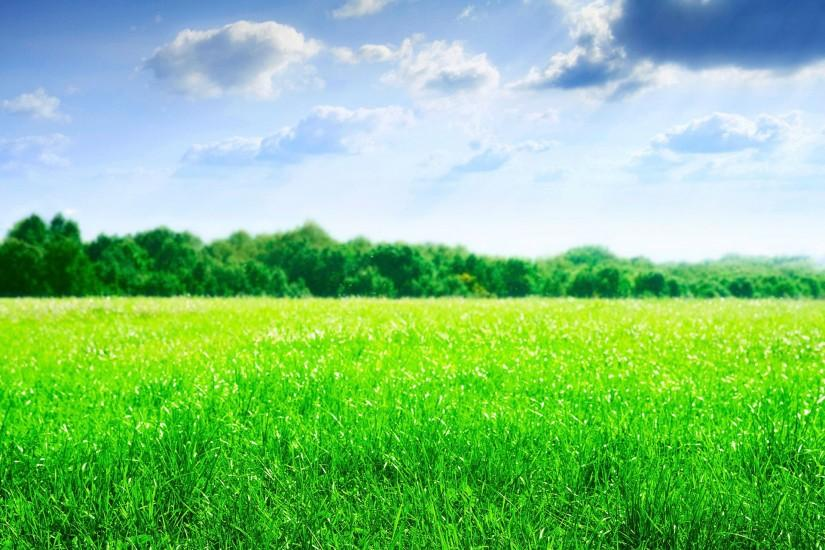 green field wallpaper click right and save as to download green field .