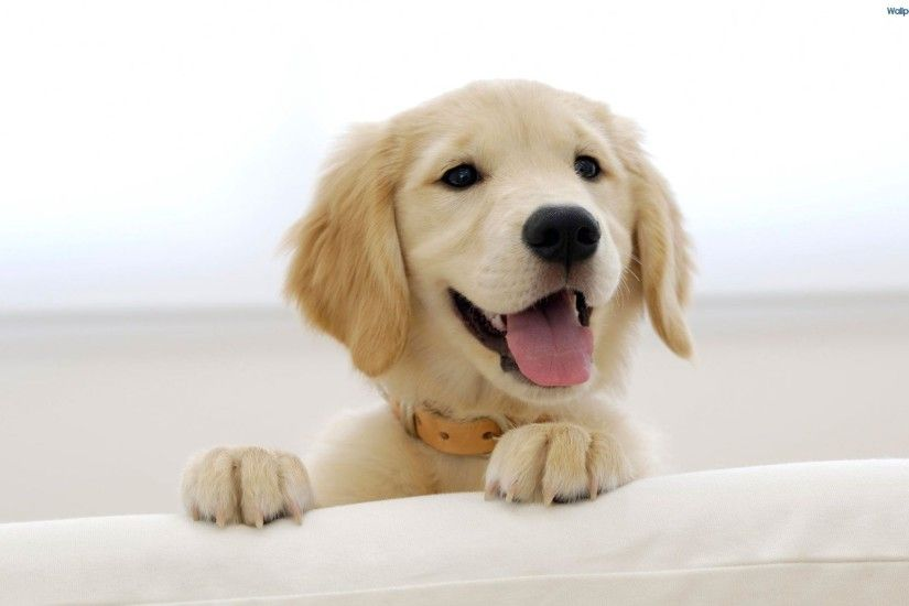 Cute Puppy Wallpapers-79 – free download