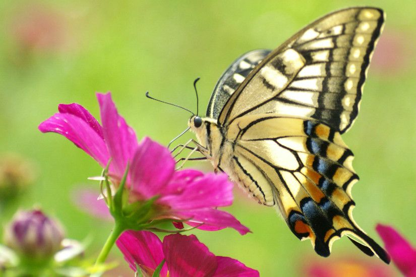 Butterfly With Flowers Wallpapers Al080b