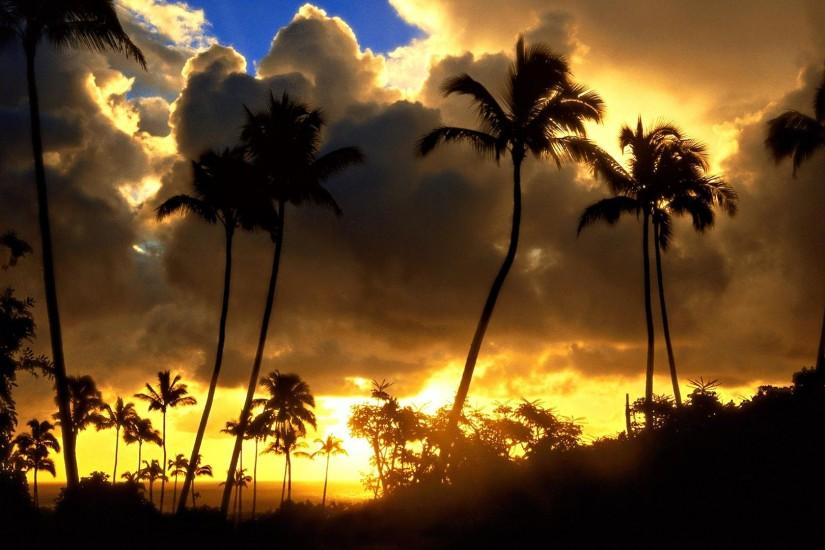 Palm Trees Sunset Wallpapers