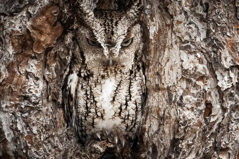 HD Realtree Camo Wallpapers - Realtree Camouflage Owl Animal HD Wallpapers