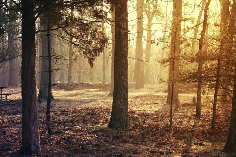 Preview wallpaper forest, trees, grass, morning light 3840x2160
