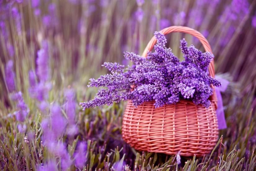 most popular lavender wallpaper 1920x1200 for xiaomi