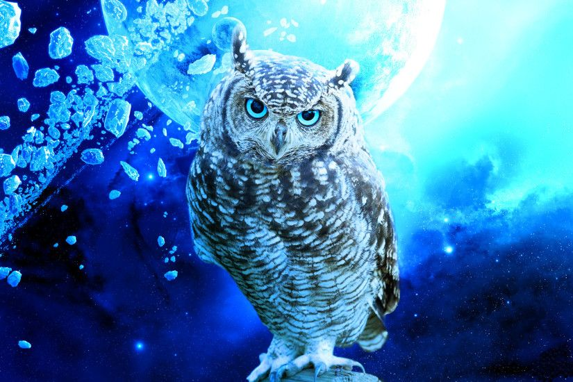 Download Owl Bird Stars Debris Blue Planet Wallpaper At Fantasy Wallpapers