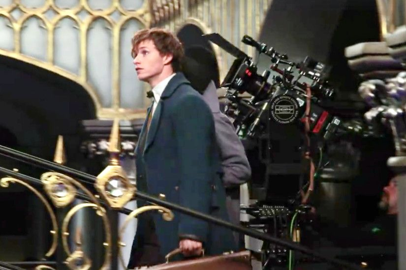Newt Scamander images Eddie Remayne as Newt Scamander HD wallpaper and  background photos