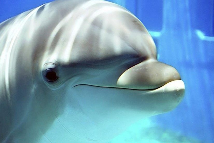 Dolphin Wallpaper 28 – HD Wallpaper, Wallpaper Pics - The Best .