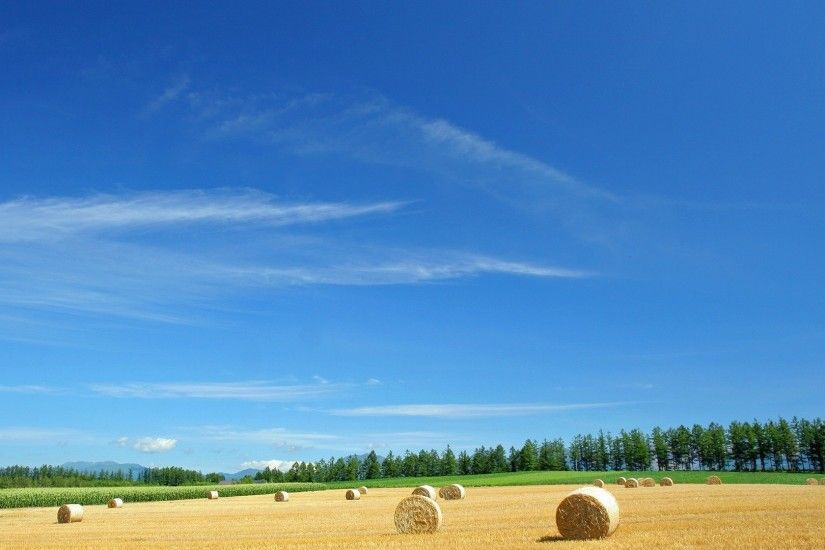 Preview wallpaper field, economy, hay, straw, bales, summer 1920x1080