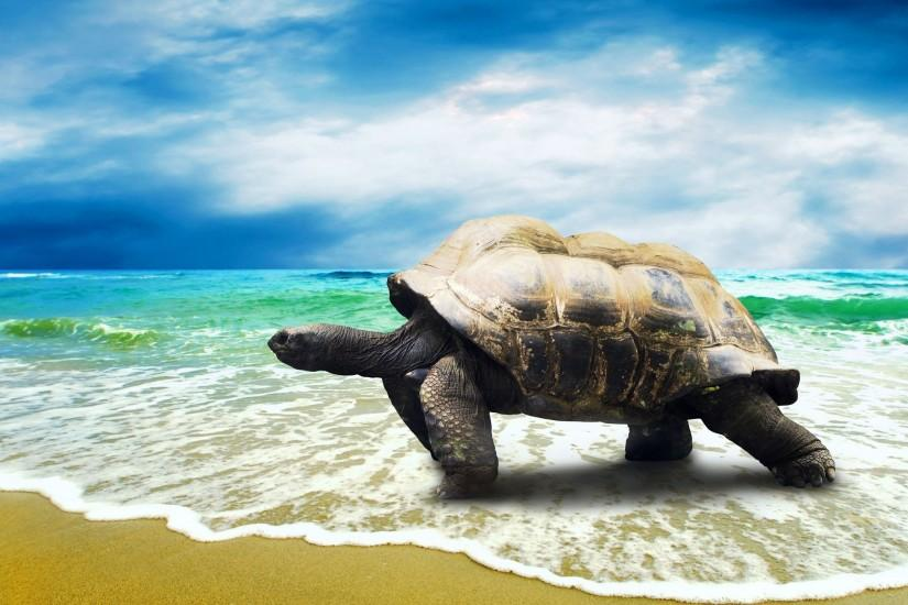 Big Turtle Walking on Beach HD Wallpapers.