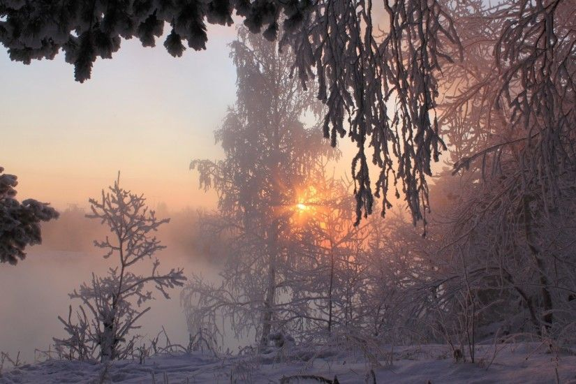 Beautiful Foggy Winter Peaceful Wonderful Magnificent Dry Trees Frosty  Amazing Lights Fog Xmas Calm Travels Sunrise
